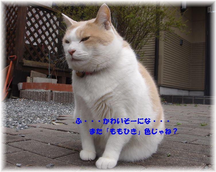 c0059331_3203944.jpg