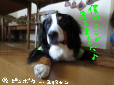 e0160787_2014518.jpg