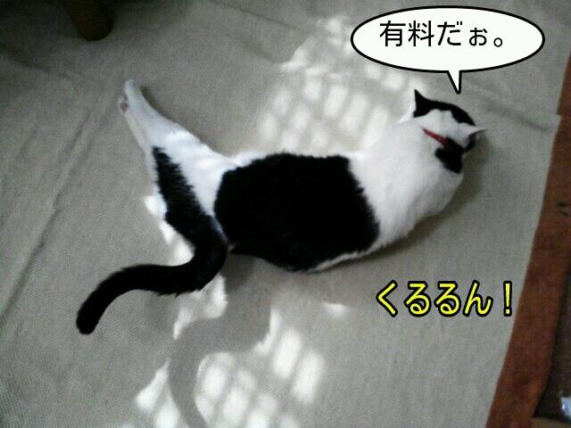 c0181639_20132659.jpg