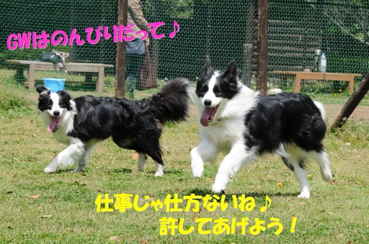 c0147241_1847385.jpg