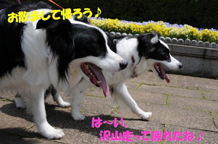 c0147241_18492761.jpg
