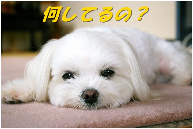 a0105267_10583870.jpg