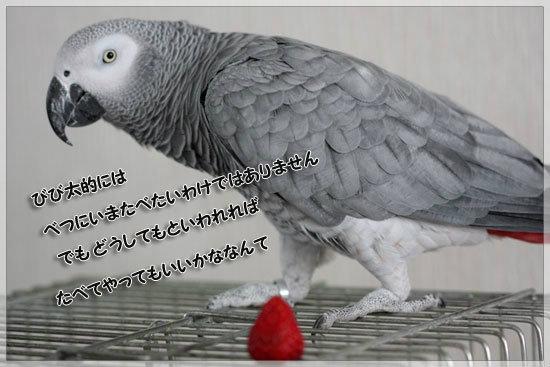 e0235910_6324450.jpg
