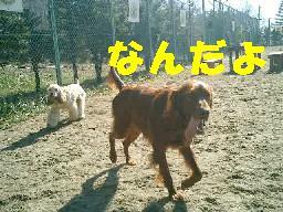 c0049339_123271.jpg