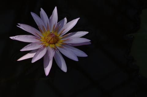 c0288455_18185326.jpg