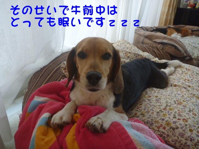 c0166622_10424429.jpg