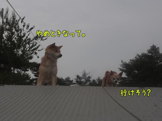 c0298732_17553845.jpg