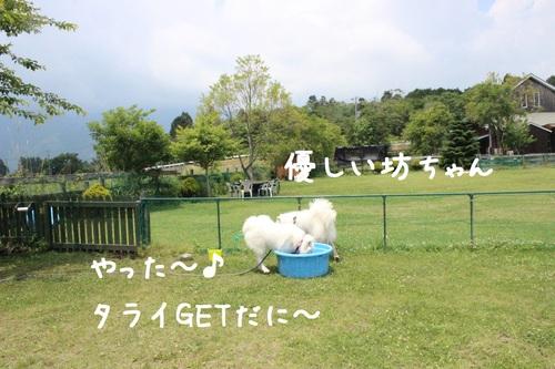 a0269552_0414474.jpg