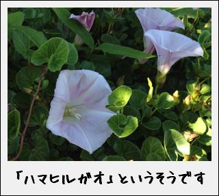 c0259934_1871928.jpg