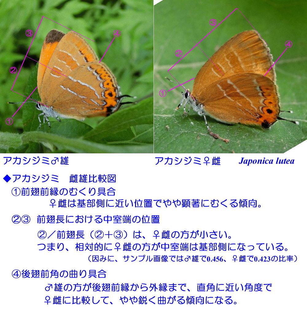 a0146869_8222774.jpg