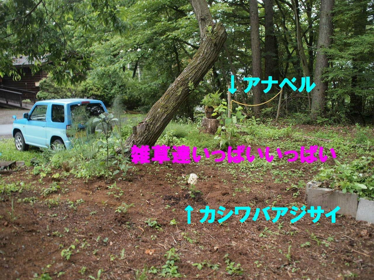a0299945_231193.jpg