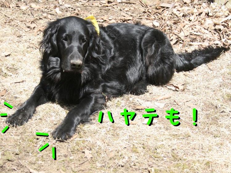 c0237824_1051443.jpg