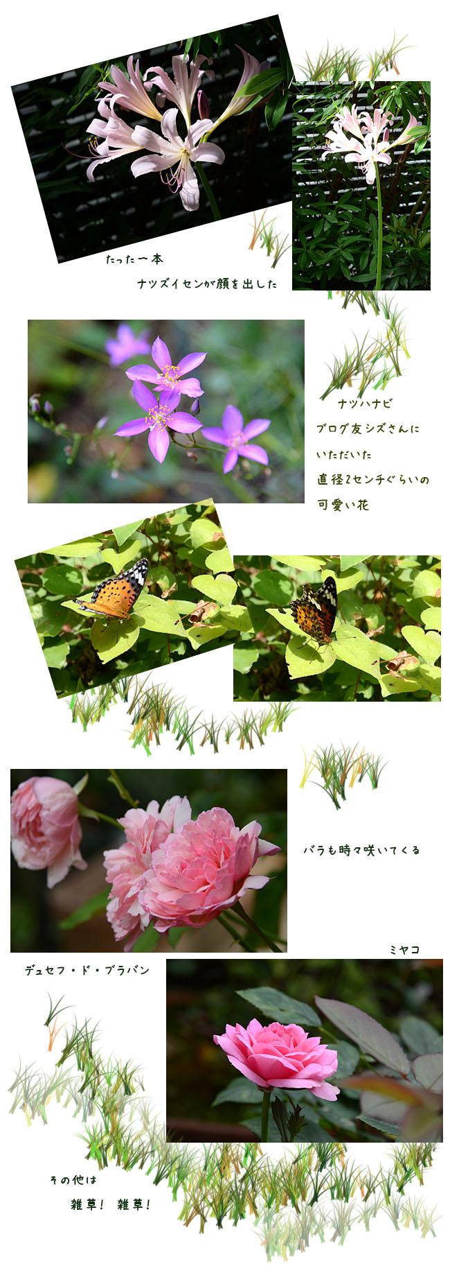 e0020954_15305132.jpg