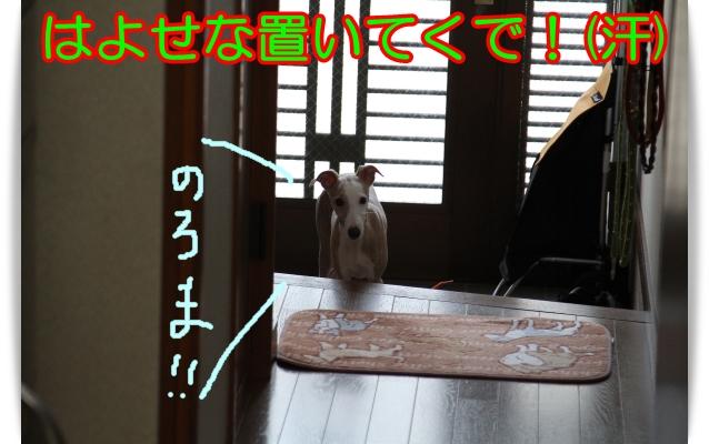 e0100007_2011227.jpg