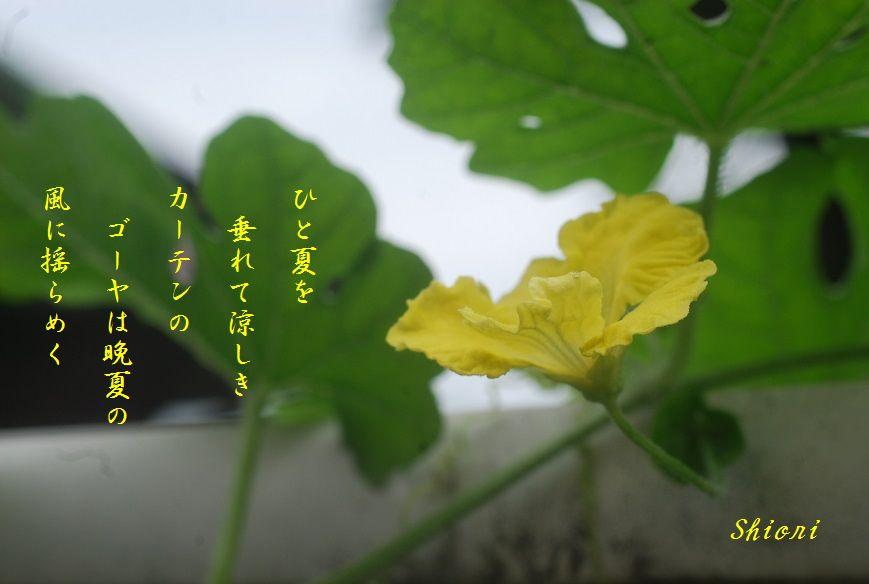 c0187781_02114.jpg