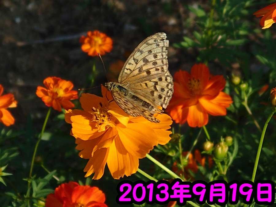 e0253104_2395139.jpg