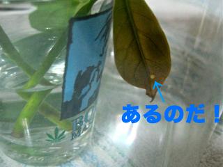 c0211810_9514474.jpg