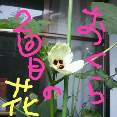 a0046803_10145517.jpg