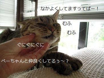 c0139488_1423685.jpg