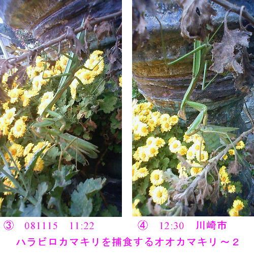 a0146869_7541217.jpg