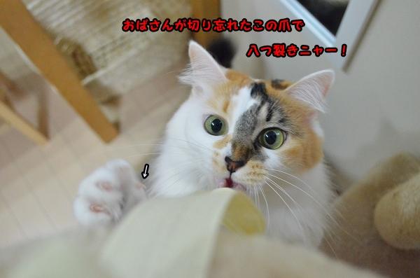 a0266372_17295465.jpg