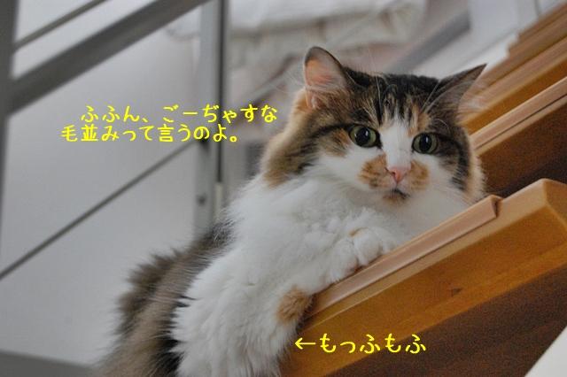 c0181639_0304948.jpg