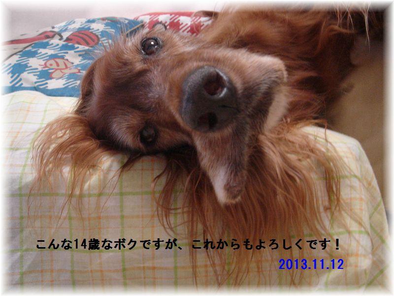 c0059331_453691.jpg