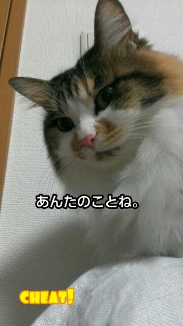 c0181639_2315249.jpg