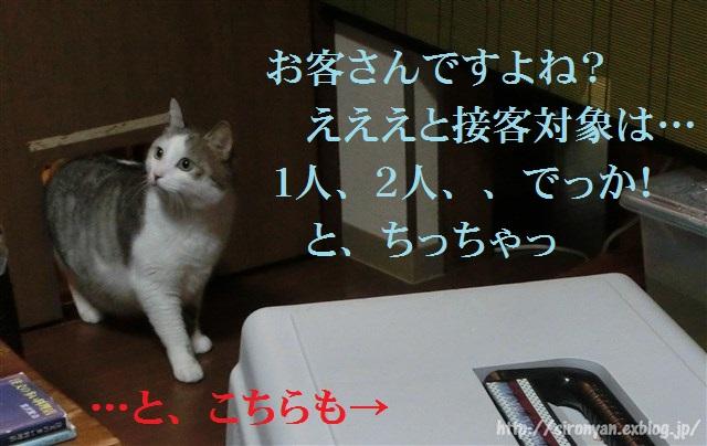 a0159490_16584821.jpg