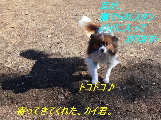 e0195743_14102093.jpg