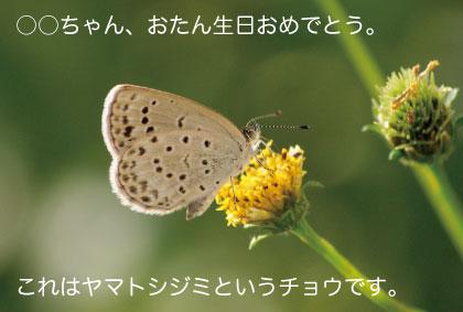 c0184125_19513490.jpg
