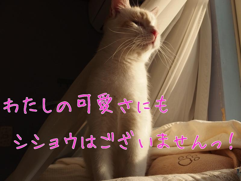 a0177105_16114435.jpg