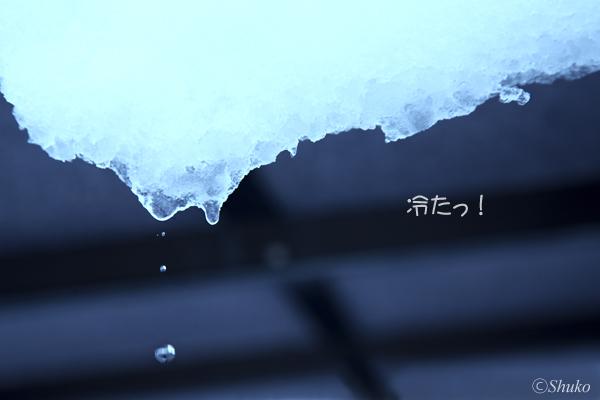 c0115293_191377.jpg