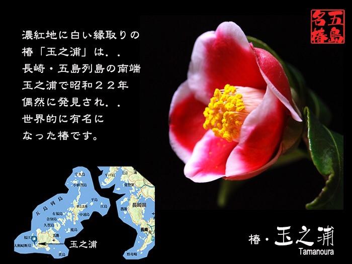 c0009981_105868.jpg