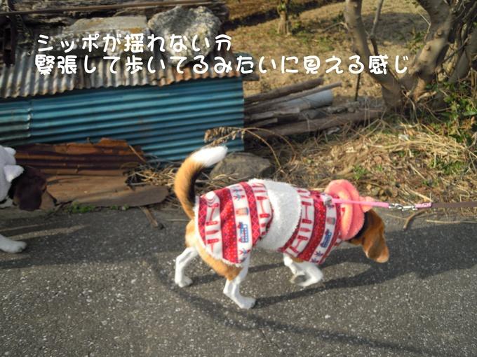 c0166622_1453996.jpg