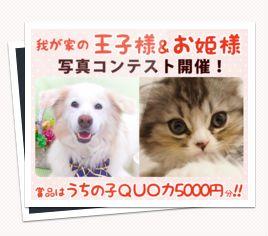 a0032004_215396.jpg