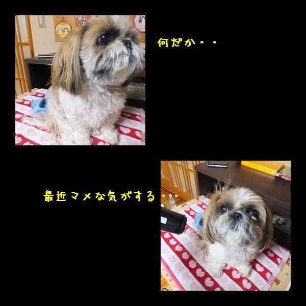 e0234881_20124342.jpg