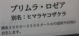 a0018655_21353216.jpg