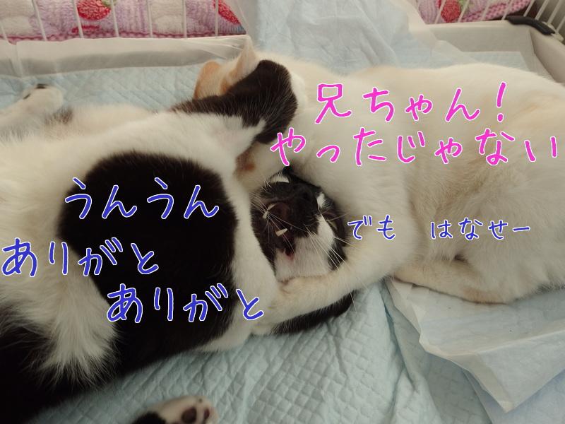 a0177105_1812566.jpg