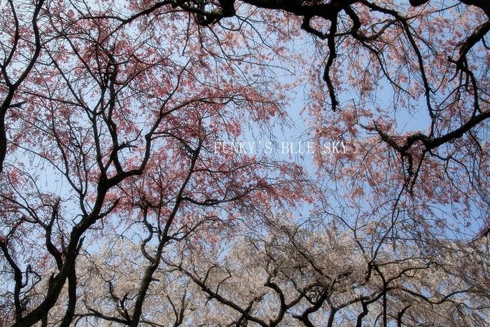 c0145250_20101017.jpg