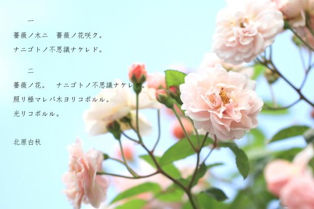 e0202033_2148431.jpg