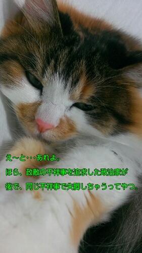 c0181639_1775620.jpg