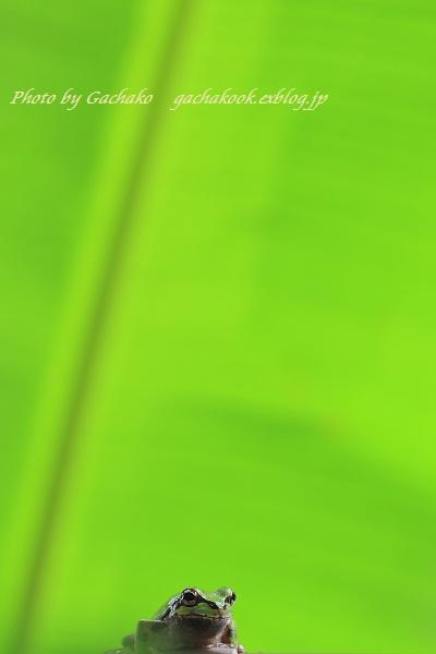e0241944_13291632.jpg