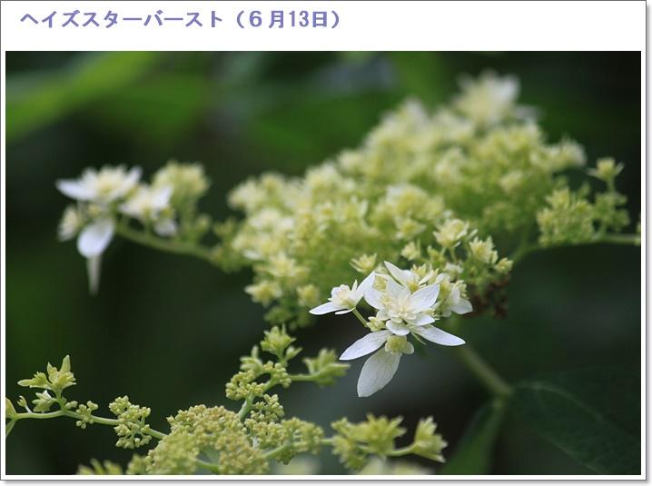 c0325701_18463810.jpg
