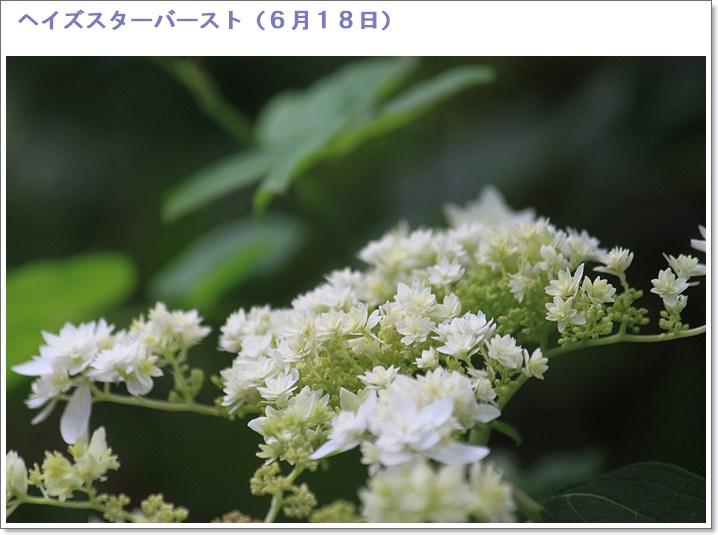 c0325701_18464128.jpg