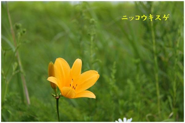 c0037200_22112087.jpg