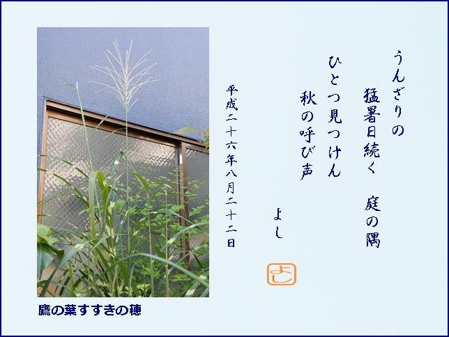 e0033229_2010765.jpg