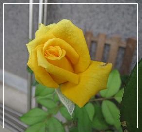 a0143388_11214044.jpg