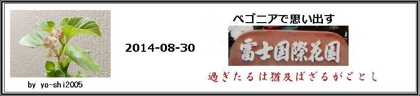 e0033229_1549917.jpg
