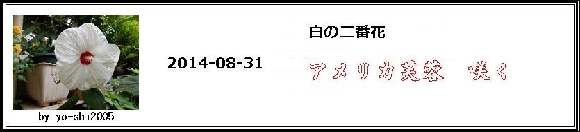 e0033229_1695687.jpg